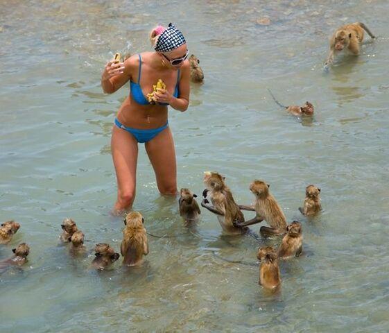 File:Sea Monkeys Attack.jpg