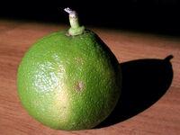 Bergamotfruit