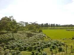 Landscape of Goalpara District of Assam 3012