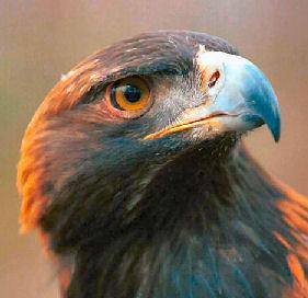 File:Raptors 2.jpg