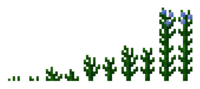 Flax Plants Growth