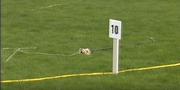 Fleabot 10 metres