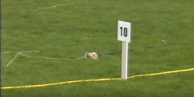 File:Fleabot 10 metres.png