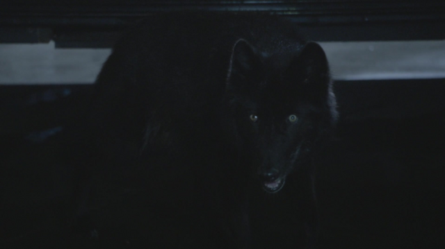File:502Wolf.png