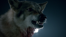 Wolf-growling-Teen-Wolf-Season-6-Episode-11-Said-the-Spider-to-the-Fly