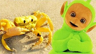 Teletubbies Digging In Sand - Crabs 134 Cartoons for Children