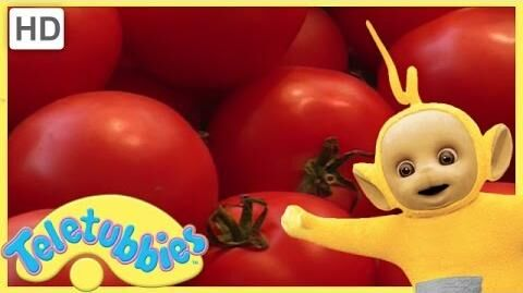 Teletubbies Full Episode - Making Salad Teletubbies English Episodes