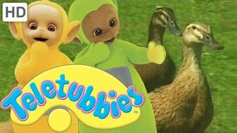 Teletubbies Ducks - HD Video