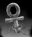 A.E. Virus.png