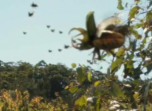 File:Beetles.png