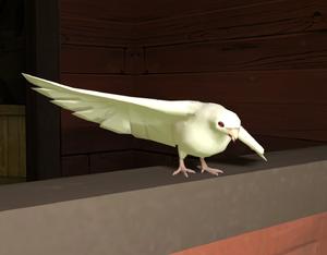 Aristotle the Dove