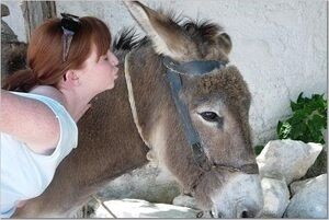 Donkeykiss