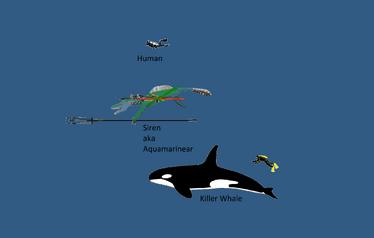 Size comparasince Human vs Aquamarinear