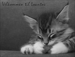 File:Kitty.jpeg