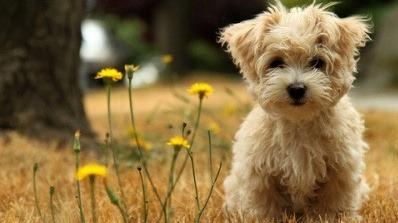File:Sweetie in A Field.jpg