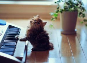 File:Kitty Playing Piano.jpg