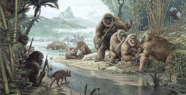 File:Gigantopithecus with homo erectus-large.jpg