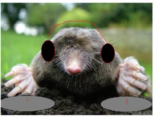 Mole DJ Thursbinator2