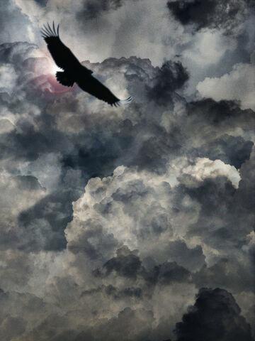 File:Vulture 1.jpg