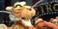 Butch the Tiger