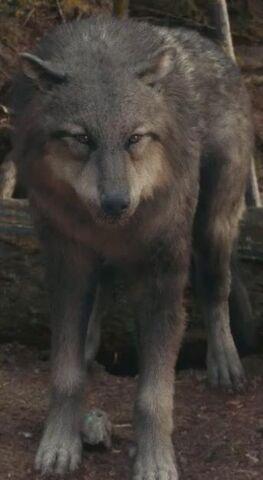 File:Jordy Wolf Form.jpg