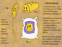 Smilewheat