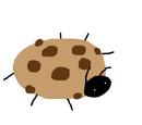 Cookie Beetle