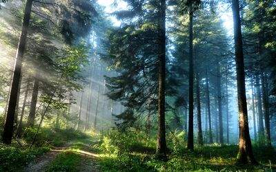The Mystic Forest