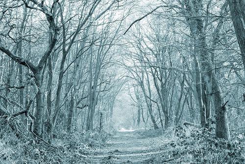 File:Winter-woods2.jpg