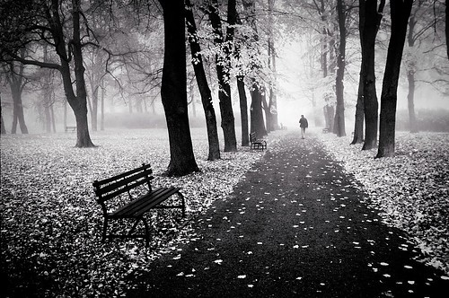 File:Black,and,white,forest,leaves,path,alone,black,,,white-4086b831d5aae3a650a157d6115c4844 h.jpg