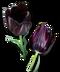 C205 Beautiful Flowers i05 Black Tulip