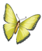 Treasure Island Update Butterfly yellow