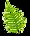 C178 Potion future i03 Three fern flowers