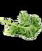 C295 Nutritious salad i02 Kale