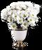 C009 Fragrant Flowers i03 Daisies