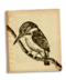 C139 Beautiful birds i05 Kingfisher