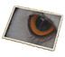 C509 Pictures of eyes i05 Owl eyes