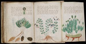 300px-Voynich Manuscript (170).jpg
