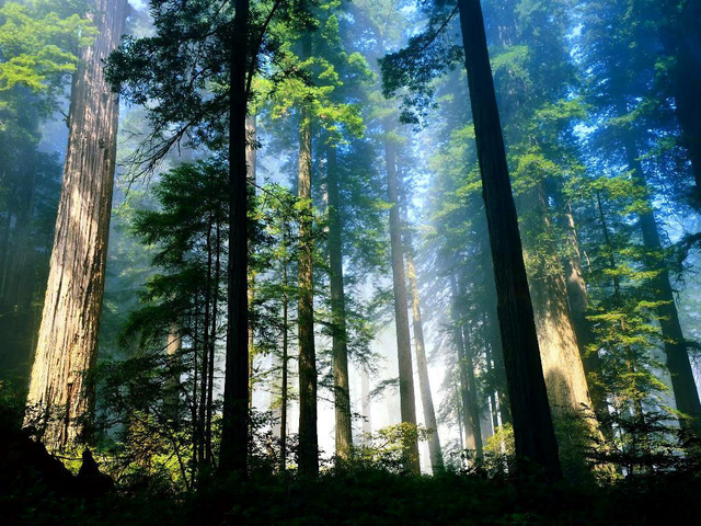 File:Woods.png
