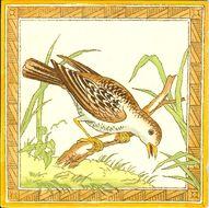 NewBirds-03-66f