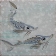 Fish 66