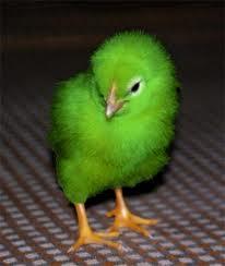 File:Green Chicken.jpg