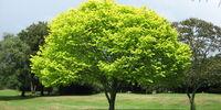 Treekaru