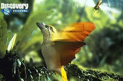File:Spitfire bird.jpg