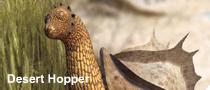 File:Desert hopper.png