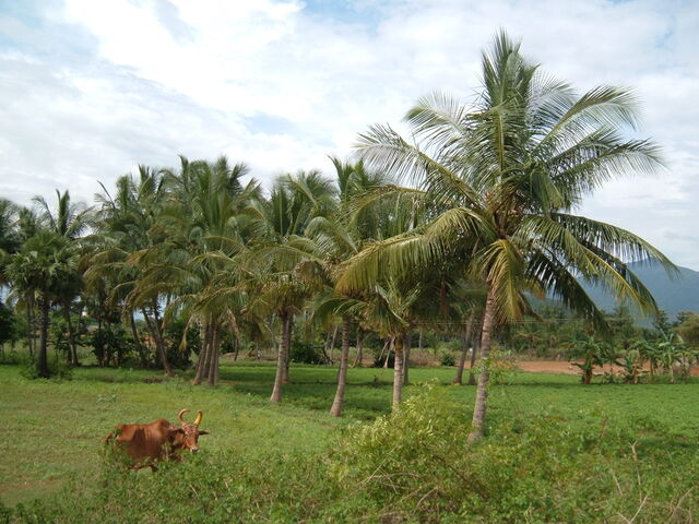 File:Coconut Grove.jpg