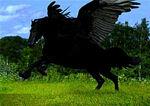 Pegasus Mutt