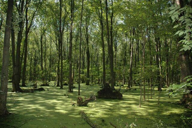 File:Swamp.jpg