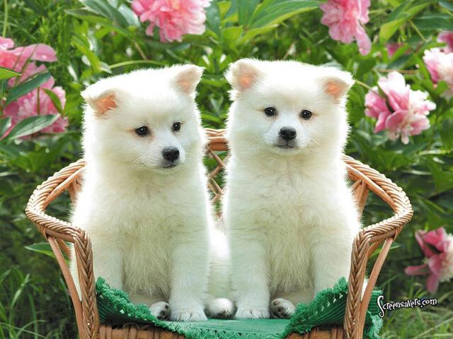 File:2 Puppies.jpg