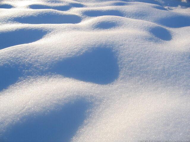 File:Snowcoat.jpeg